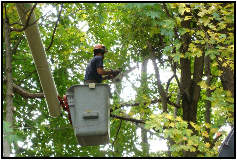 Worker Cutting Branches from a Tree