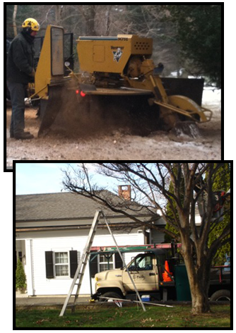 Stump Grinding and Tree Pruning in Fairfield, CT.